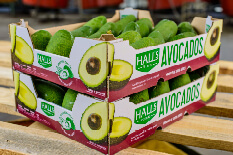 Avocado Export  Carton
