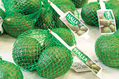 Avocado Nets